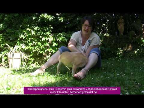 Synopet für Hunde 2 Grünlippmuschel- Curcumin - schwares Johannesbeerblatt Extrakt