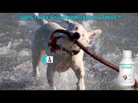 Grünlippmuschel Hund - Einzigartig - Biologisch - Flüssig