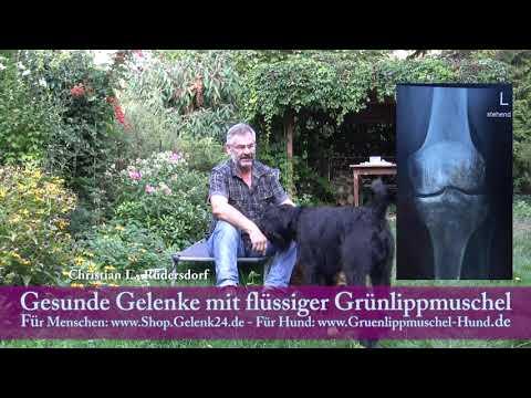 Grünlippmuschel Hund und Grünlippmuschel für Menschen - Referenz christian l