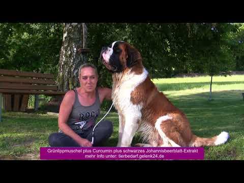 Synopet Grünlippmuschel für Hunde Curcumin - schwares johannesbeerblatt Extrakt