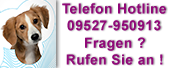 Grünlippmuschel Hund Logo